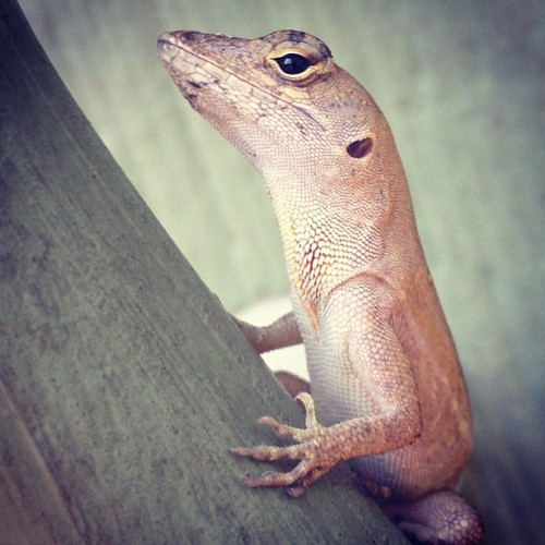 I found a #gecko or something.
