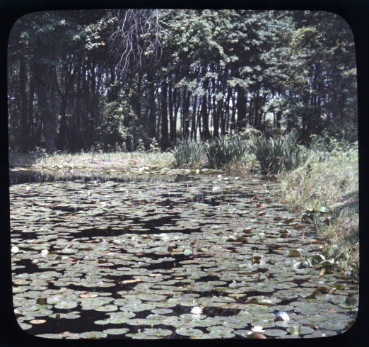 View of the lily ponds at Mrs. W.S. Hilles home (1924)  Click here  to view the image in our Digital Archives.