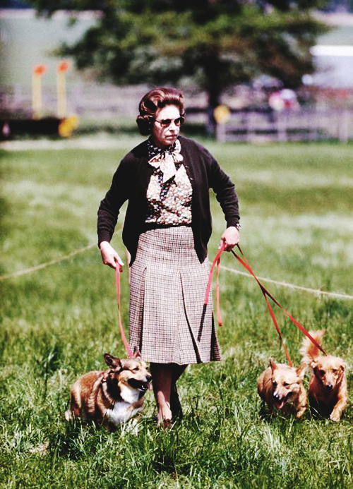beautifulroyals:  55/87 pictures of queen elizabeth ii.  ROYAL CORGI! And some dorgis.