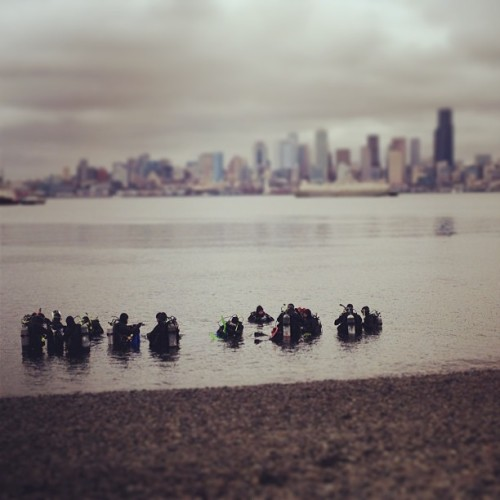 Northwest scuba (at Seacrest Park)
