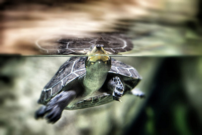 Refraction of the Terrapin. Photo by Griff~Ography