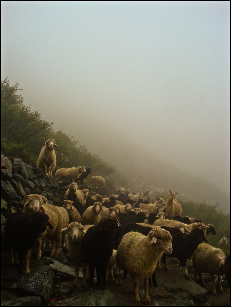 SHEEPS:) (by manumint-[BUSY])