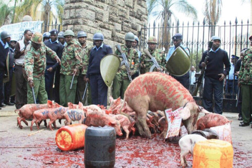 "littlemissconceptions:  Al Jazeera - 'Greedy pig' protest held at Kenya parliament  Demonstrators release dozens of piglets on parliament to protest against a bill that would see pay raise for lawmakers.  Kenyan demonstrators have released a litter of pigs and poured blood on the pavement outside the gates of parliament in Nairobi to protest a proposed law that would raise wages for parliamentarians. Police and parliament officials chased the pigs after using tear gas, batons and water cannons to disperse the nearly 250 protesters who marched through downtown Nairobi Tuesday and sat down at the entrance to parliament. The names of specific MPs has been written on the bodies of some of the pigs, which were rounded up and loaded them onto a lorry. At least 10 people were arrested. ""We will not allow members of parliament to increase their salaries at will,"" Okiya Omtatah, one of the protest organisers shouted. ""They are greedy just like the pigs we have brought here,"" Omtatah added. Go here to read more….  I don't know about the blood (if it's real) and about writing on the bodies of the pigs, though."