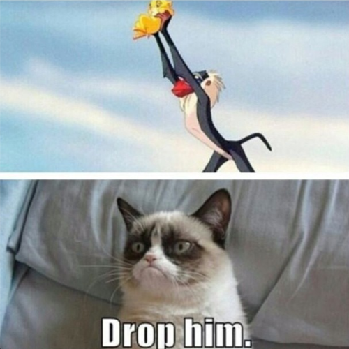 "Lmbo this Angry Cat Livens my day every time I see it. "")"