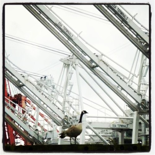 Goose with #containercranes #portofseattle #seattleparks #shipping