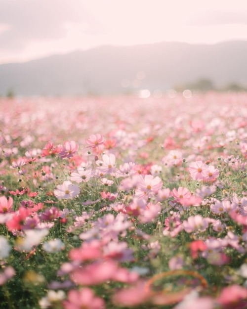Field With Flowers