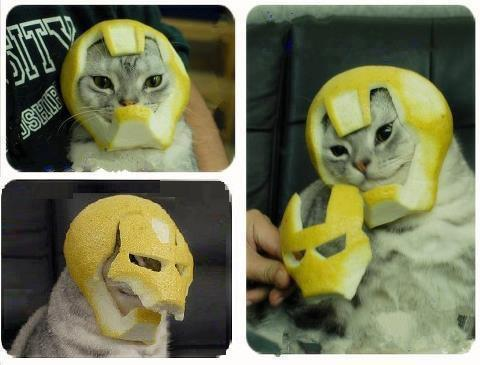 Iron Meow is the hero we need, not the hero we deserve.