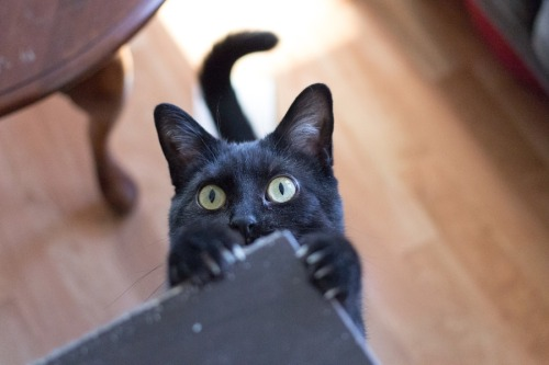 photogenicfelines:  (Patrick Kuhl)