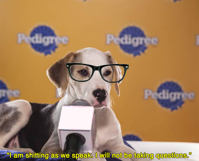 funnyordie:  7 Highlights from Last Night's Puppy Bowl Post-Game Press Conference Ray Lewis wasn't the only champion saying crazy shit last night.