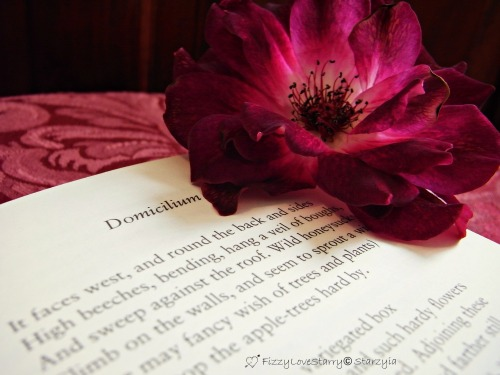 starzyia:  Domicilium: my home is not my home without fresh roses and my book of Thomas Hardy poems.