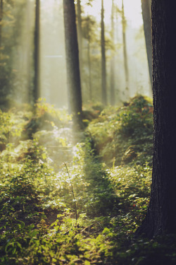 wandering-through-nature:  crooksh4nks: Mathijs Delva