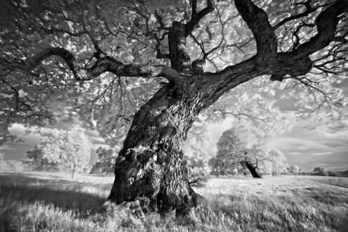 black-and-white:  by Martin Stavars (via Portraits of Trees on Photography Served)