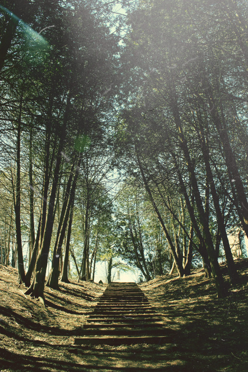 refinedmind:  Forest Steps - by Thomas