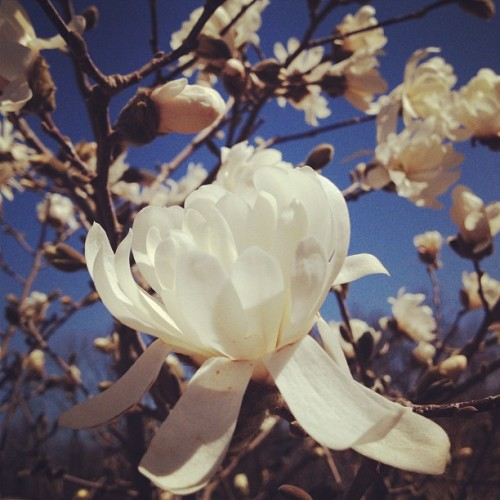 avantblargh:  Such a beautiful Sunday 🙏🌸🙏