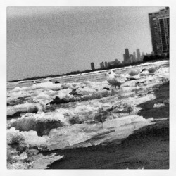 #March = still #frozen #tundra. #chicago #lakemichigan #icefloats #seagull #photography #picoftheday #instadaily #bandw #blackandwhite #snow #freezing #latergram #relaxation #therapy #nature #skyline