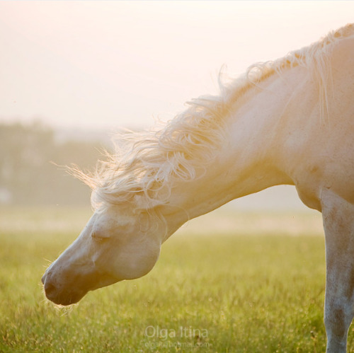 equine-dream:  Source
