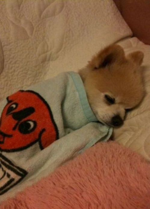 cute-overload:  All Tucked Inhttp://cute-overload.tumblr.com