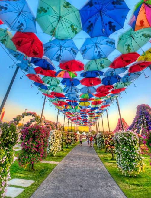gyclli:  Miracle Garden / Dubai  Photo Vineet Suthan http://500px.com/photo/28335203