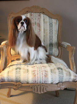 showdawgblawg:  Elvis On My Favorite Chair ( Made Explore #259) by akgregory26 on Flickr.