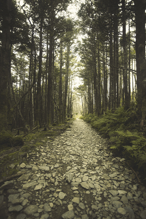 euphoricspirit:  (by SC|Photography)
