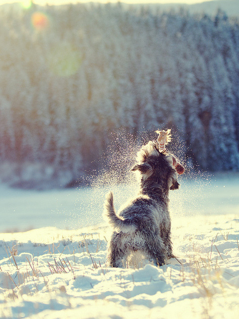 Kajsa having fun by klinkekula on Flickr.