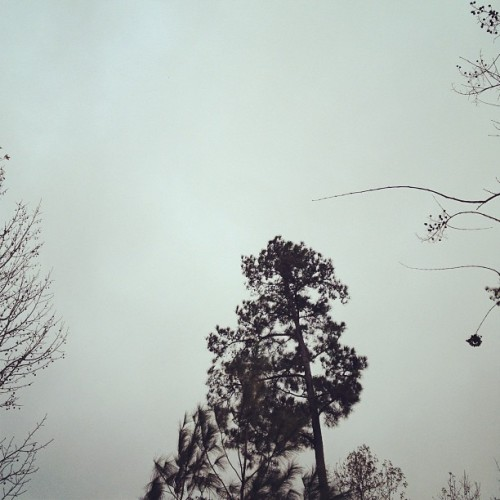 #cold grey skies. #fmsphotoaday #day28 #sky #nature #trees