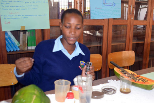 "typicalugandan:  Ugandan girl, 19, makes deworming tablet: Innovation. The medicine, made of dried pawpaw seeds, sugar and cassava flour or banana flour.  ""My dream is to become a veterinary doctor but I am also an emerging innovator,"" says Christine Nalukwago, the girl behind the research which might lead to the discovery of locally-made de-worming tablets.Nalukwago, 19, currently a Senior Six student at Kitante Hill School, says she hatched the idea of coming up with a solution to parasitic worms in children while staying with her grandmother.   ""My grandmother used to give us dried pawpaw seeds to chew when we were still young but we didn't know the use. But one day, she told us that they expel worms from our bodies,"" she says.   Nalukwago says she became inquisitive after her grandma's revelation and when she joined secondary school where she has access to laboratories, she chose to carry her research forward.   ""At first, the results were not good but I kept on trying,"" says Nalukwago, who offers Physics, Chemistry, Agriculture and sub-Math as a subject combination.  How it is done: Nalukwago says some of the substances she mixes to develop the 'drug' includes; dried pawpaw seeds, sugar and cassava flour or banana flour.""I mix them in equal quantity and leave them in a clean open place to concentrate. Sometimes the whole process takes a week when there is enough sunshine or two weeks when there is little sunshine,"" Nalukwago explains.She says after final tests in the laboratory, she tried the drug on a worm and it died instantly. (read more via Daily Monitor)"