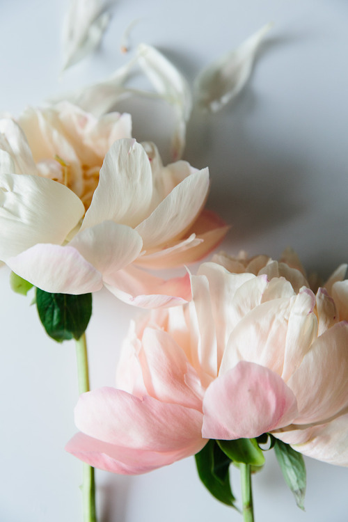 purebeachboho:  so pretty   Pure soft petals…