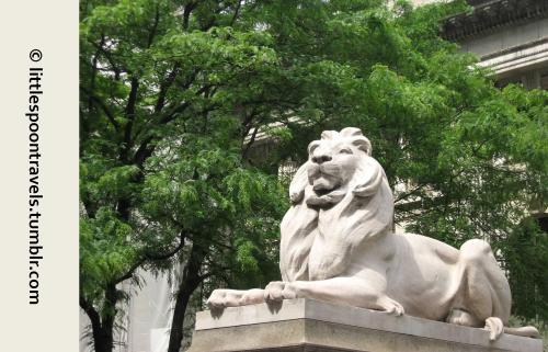 Visiting the lions at the New York Public Library on our first anniversary trip.  {5/24/2009} Reblogged from my travel photo blog, littlespoontravels.tumblr.com.