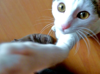 leicaarollingstone:  Hi! My name is Cat. It is really very nice to meet you!