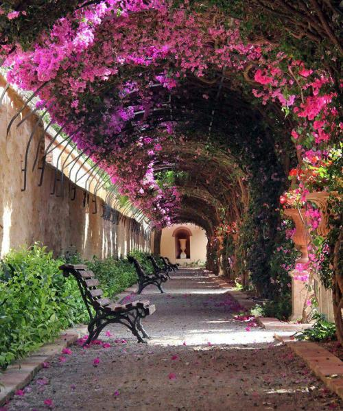 jinxylou:  Via Positive life. Jardín de Monforte in Valencia, Spain