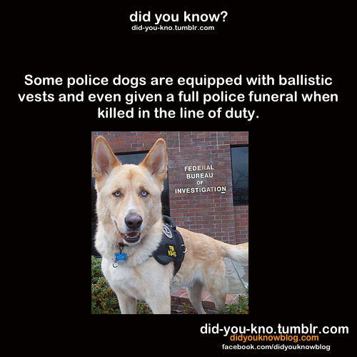 did-you-kno:  Source  also, i was watching cops and the guy kicked the dog and the cop said he'd be charged with assaulting an officer