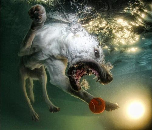 From a series of amazing underwater dog photos by Seth Casteel via thisiscolossal