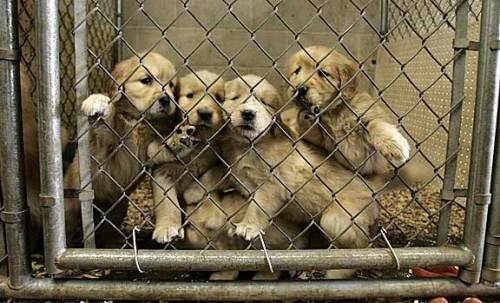Senators introduce legislation to end puppy mills.
