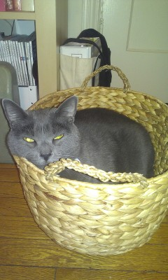 I bought myself my cat a new basket.