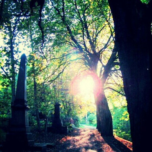 Cemetery in Sheffield UK #travel #light #england #grave #stone #cemetery