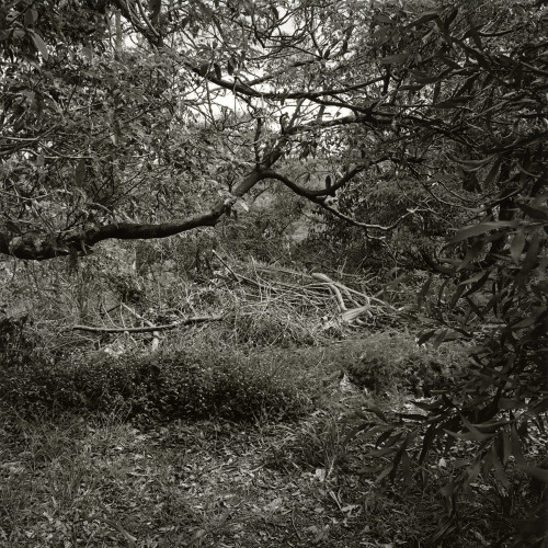 Northbridge Landscape III (2012), silver gelatin photograph.  http://james-morris.info/blog/2013/03/29/northbridge-landscape-iii-2012/