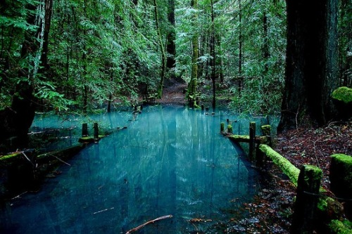 Turquoise Pond, Redwood Forest, California photo via jeanette