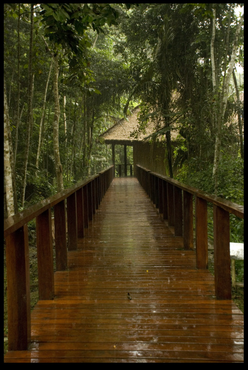 johnnypanessa:  Raining in a rainforest. The Amazon Basin. Puerto Maldonado, Peru.