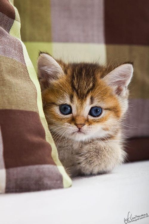 cutestofthecute:  (via)