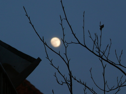 moon from my window-Tha Hague NL