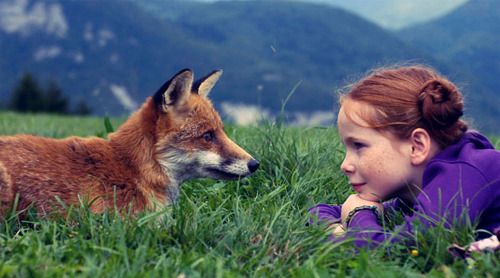 valkyriethais:  animals, fox, redhead, the fox and the child, wildlife - inspiring picture on Favim.com on We Heart It - http://weheartit.com/entry/13496956/via/valkyriethais   Hearted from: http://favim.com/image/124433/