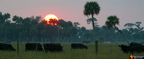 A year in the life of a Florida cattle ranch has been captured by photographer Bob Montanaro. See more about the project here.