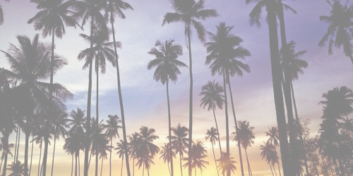 Palm Tree Icon Tumblr Palm Trees Header Tumblr