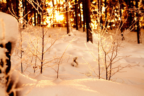 conflictingheart:  snow sunrise