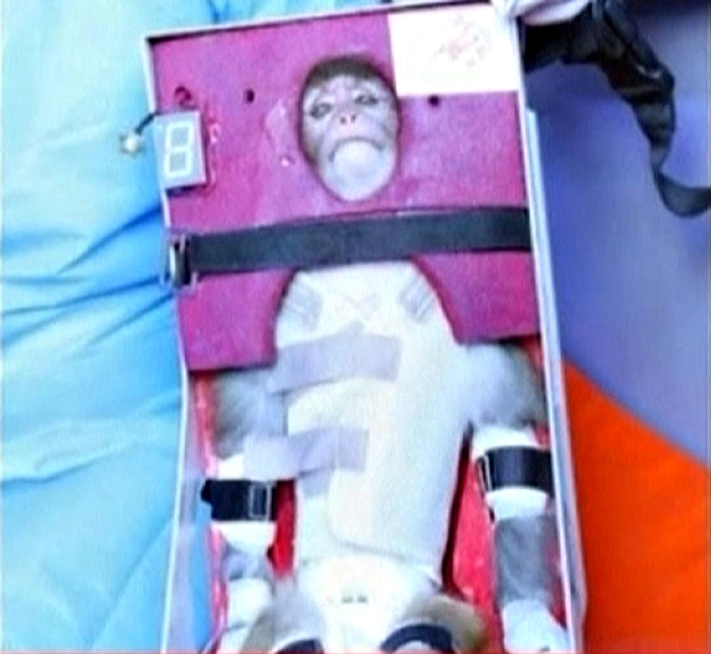 Iran said on Monday it had launched a live monkey into space, seeking to show off missile systems that have alarmed the West because the technology could potentially be used to deliver a nuclear warhead. The Defense Ministry announced the launch as world powers sought to agree a date and venue with Iran for resuming talks to resolve a standoff with the West over Tehran's contested nuclear program before it degenerates into a new Middle East war. Efforts to nail down a new meeting have failed repeatedly and the powers fear Iran is exploiting the diplomatic vacuum to hone the means to produce nuclear weapons. The Islamic Republic denies seeking weapons capability and says it seeks only electricity from its uranium enrichment so it can export more of its considerable oil wealth. READ ON: Iran says it launched monkey into space