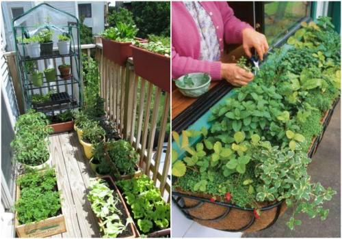 quantumlotus:  Tips for starting an apartment garden. http://ohmyapt.apartmentratings.com/gardening.html