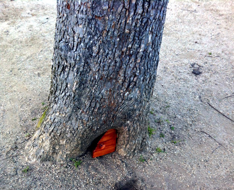 "laughingsquid:  Mysterious Tiny Door Discovered in Tree in San Francisco's Golden Gate Park  ""Back in March a tiny wooden door was discovered at the base of an elm tree in San Francisco's Golden Gate Park. The door has become a bit of a destination for park visitors, who have been leaving behind notes, coins, acorns, and other trinkets inside the tree. The mystery door is located in the park Concourse near the De Young Museum and the California Academy of Sciences."""