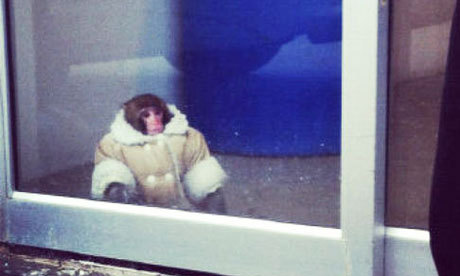 I never got around to tumbling about IKEA Monkey. It's all been said, but I have this to add: IKEA Monkey to me is like god using the world as his/her/its tumblr. Like god was just all LOL IMMA PUT A MONKEY IN A COAT. Imagine you had god powers. And that you just put a monkey in a coat. And that you then had to decide where to place that monkey on the planet for maximum likes on facebook. Then tell me you wouldn't have chosen IKEA.  Like for real. This story wouldn't be a story if this monkey was in some strip mall. It's perfect. All the way around.