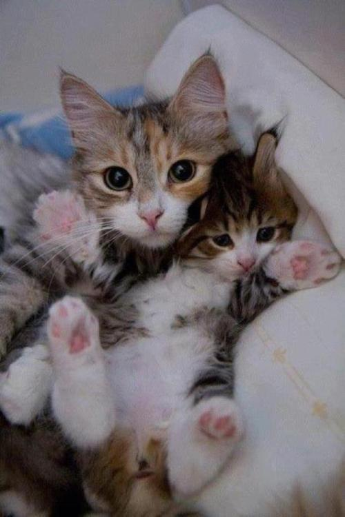 magicalnaturetour:  Mommy cat and kid by °• мау •° on Flickr. ~ Sweet Dreams beautiful friends ♥